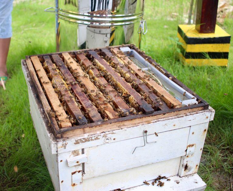 Bienenbeute mit Zargen