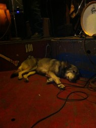 Maybelle relaxes while her person, Jon Kashner makes music
