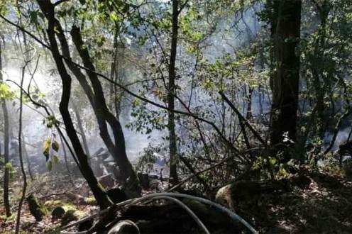 Feuer6 - Feuer im Stadtwald - 2.500 Quadratmeter betroffen