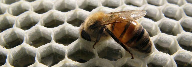 1 bi i honningcelle