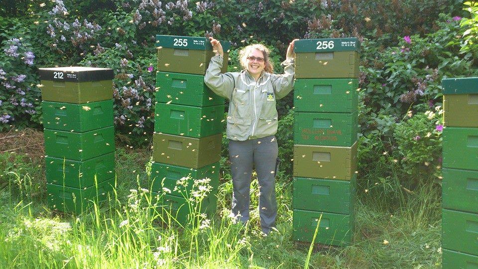 Honningepigen ved nogle af sine bistader
