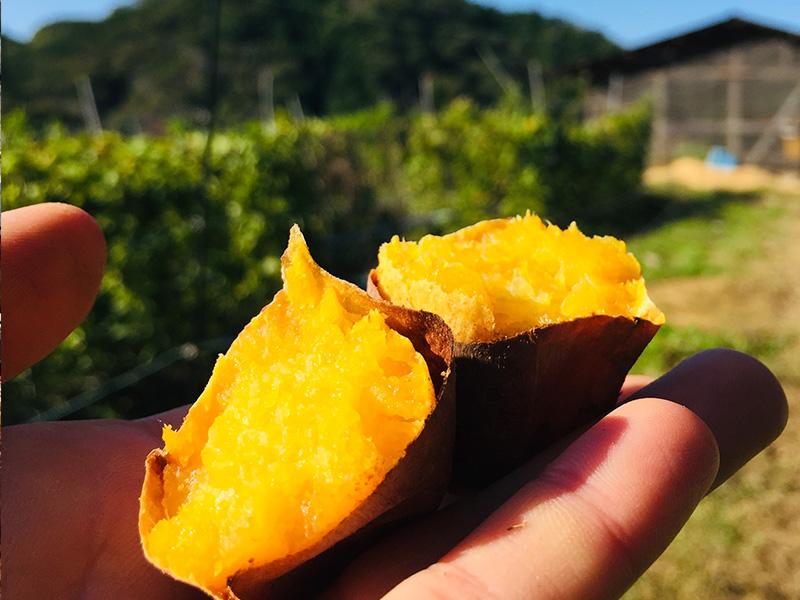 甘い絶品焼き芋