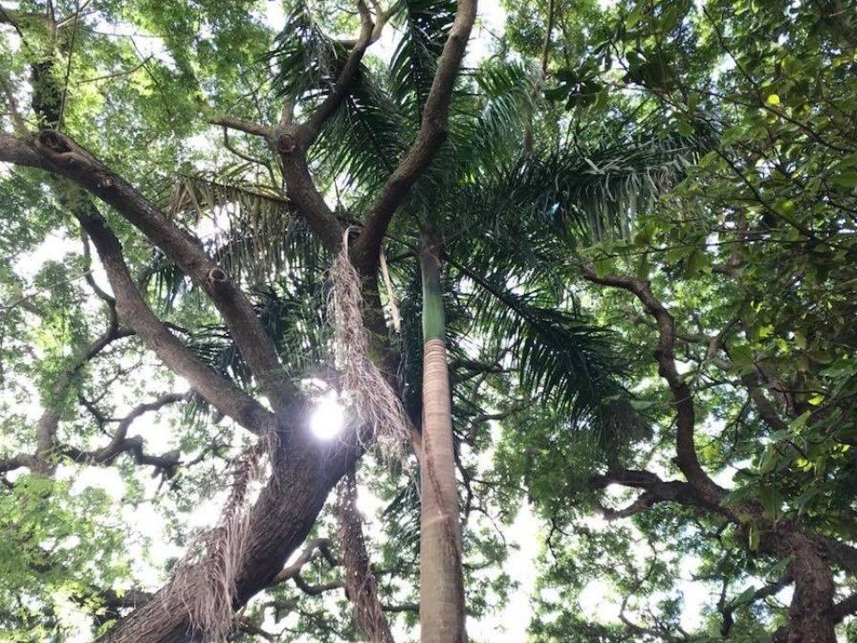 Honolulu Myohoji garden