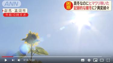 史上初20℃超えの暖冬で、関東でサクラとヒマワリが開花「2020年は最も暑い年になる」英気象庁が発表‐気候危機32