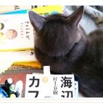 夏目漱石『吾輩は猫である』の猫は最後に