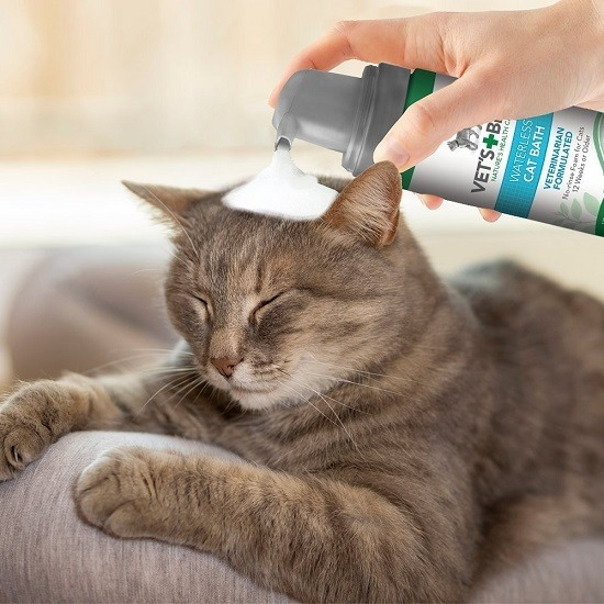 Best Dog And Cat Flea Shampoo