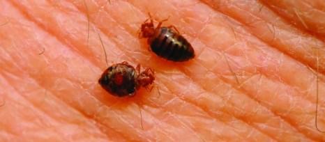 best-bed-bug-treatment-spray-bully