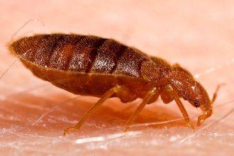 do-bed-bugs-bite