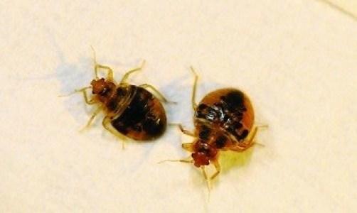 bug fly