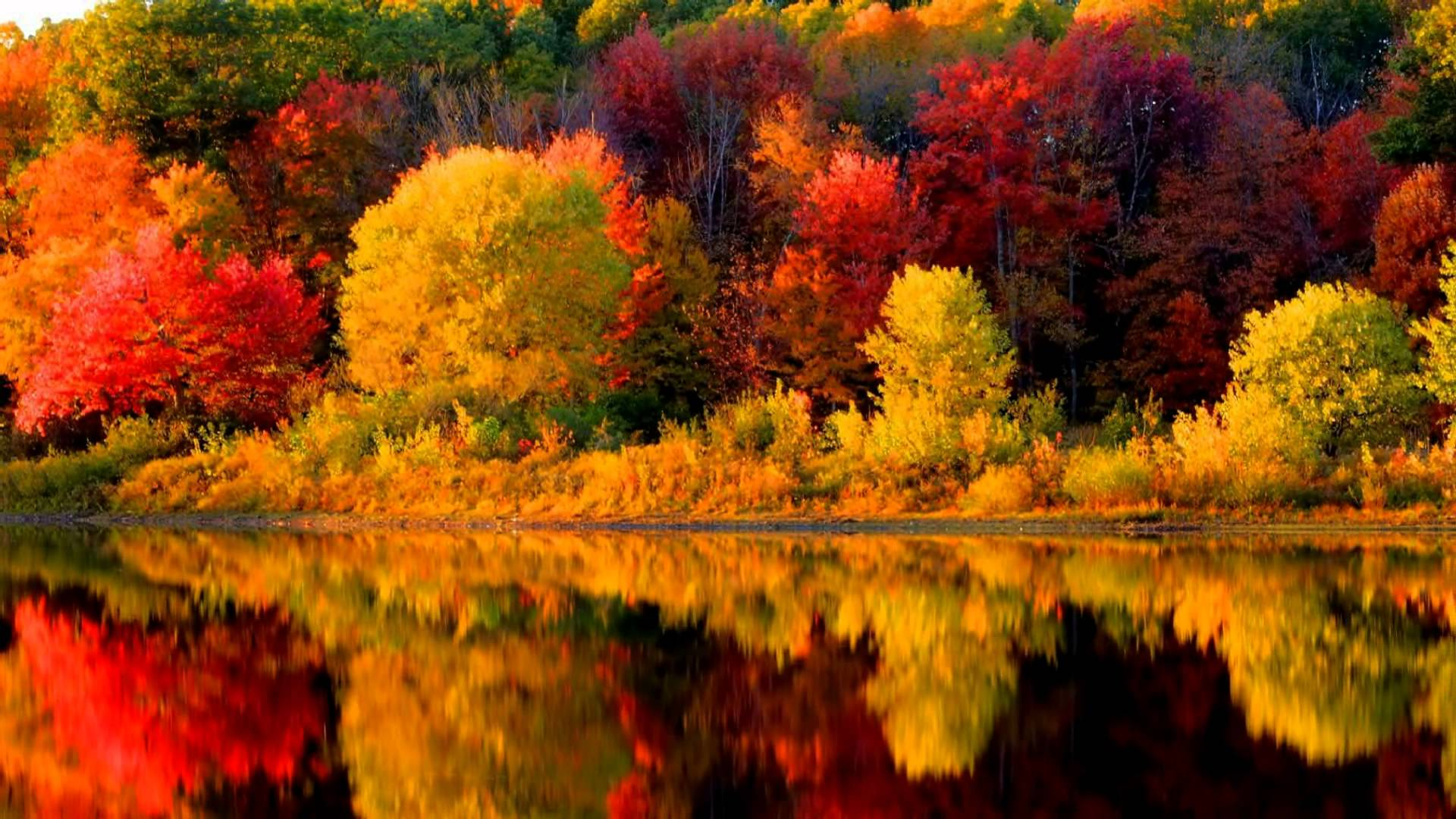 Fall Leaves Dancing Wallpaper Autumn In New England