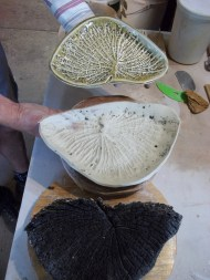 charred log on bottom – greenware plate in center – finished woodfired plate with ash glaze