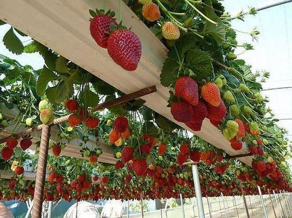Inspiring Veggies Garden Layout For Your Outdoor Ideas 11
