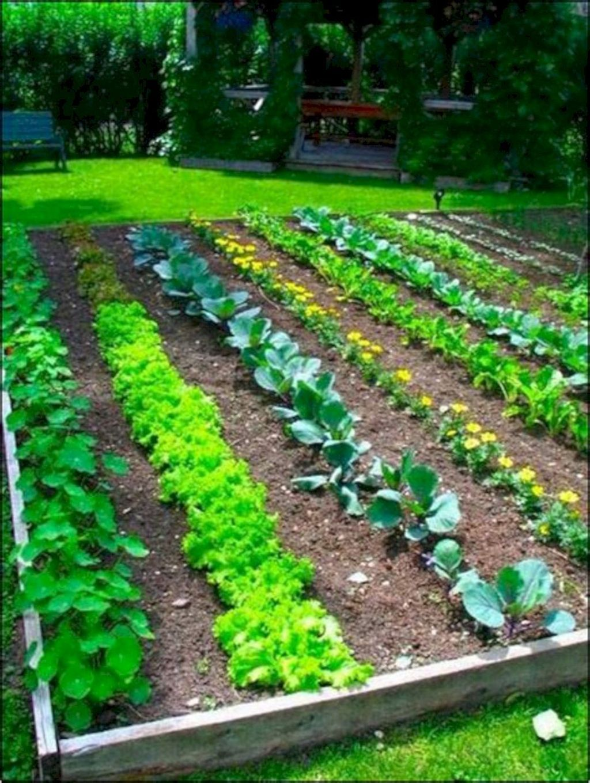 Inspiring Veggies Garden Layout For Your Outdoor Ideas 25