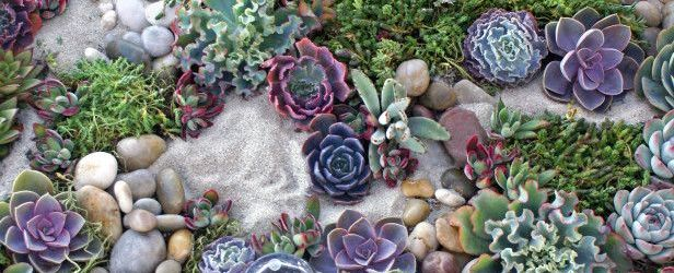 Succulent Rock Garden Ideas