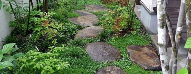 Side Of House Garden Ideas