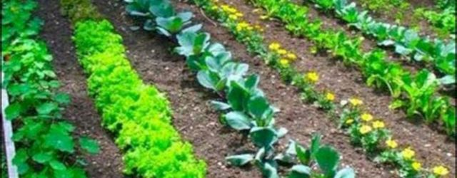 Easy Vegetable Garden Ideas