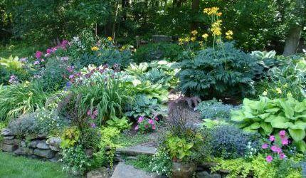Perennial Shade Garden Ideas