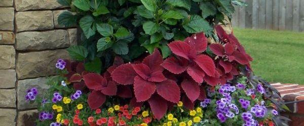 Flower Pot Garden Ideas