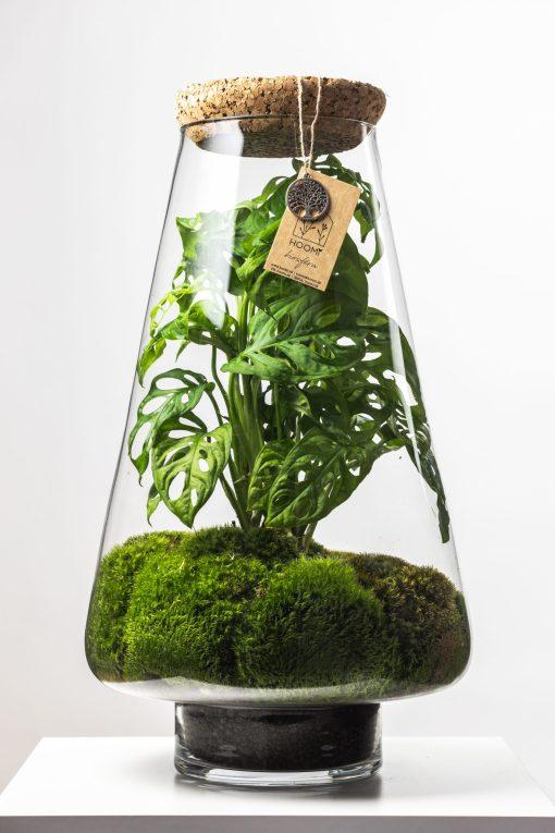 Biosféra – rastliny v skle 022