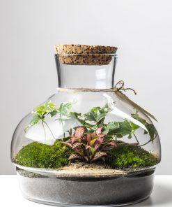 Biosféra - rastliny v skle 005