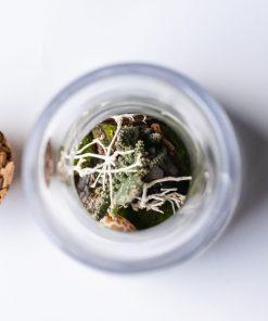 Biosféra je rastlinné terárium. Rastliny v skle sú dokonalý darček pre potešenie a načerpanie pozitívnej energie.