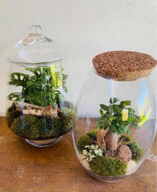 Biosféra - rastliny v skle 009