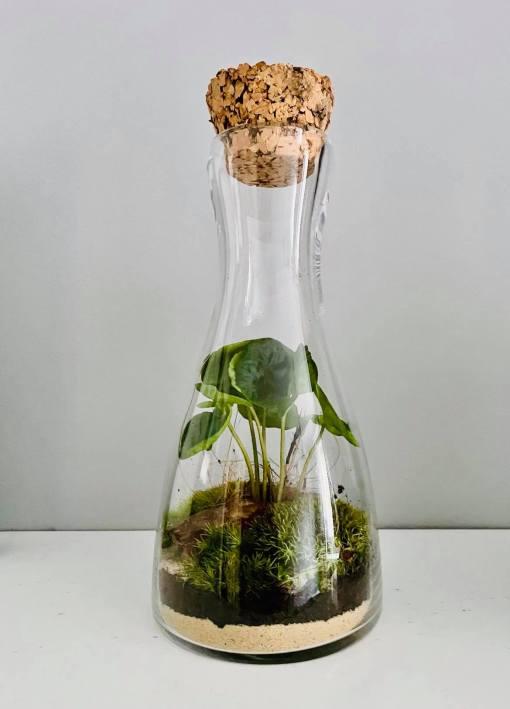 Biosféra - rastlinné terárium 029