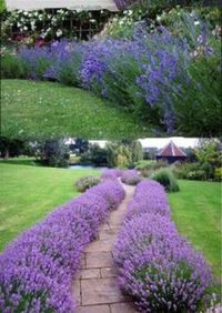 Awesome Fence With Evergreen Plants Landscaping Ideas 26