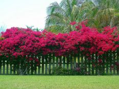 Awesome Fence With Evergreen Plants Landscaping Ideas 36
