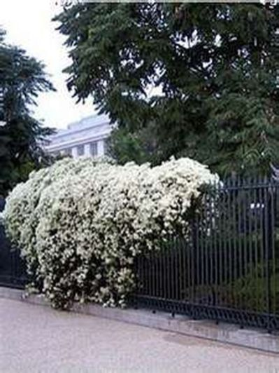 Awesome Fence With Evergreen Plants Landscaping Ideas 38