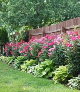 Awesome Fence With Evergreen Plants Landscaping Ideas 56