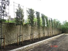 Awesome Fence With Evergreen Plants Landscaping Ideas 60