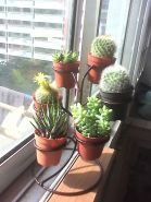 Beauty Succulents for Houseplant Indoor Decorations 28 1