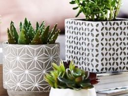 Beauty Succulents for Houseplants