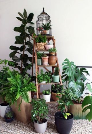 Beautiful Home Plants for Your House 12