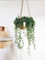 Beautiful Home Plants for Your House 13