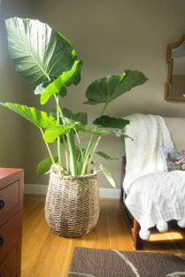 Beautiful Home Plants for Your House 16