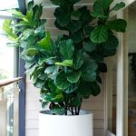 Beautiful Home Plants for Your House 19