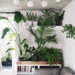 Beautiful Home Plants for Your House 23