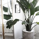 Beautiful Home Plants for Your House 24