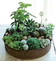 Beautiful Home Plants for Your House 4