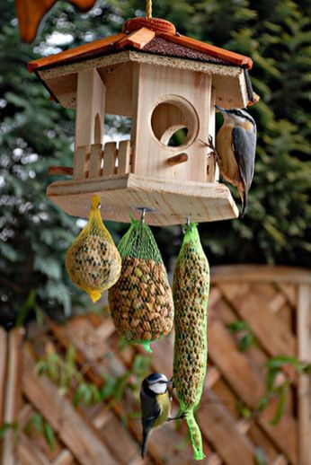 Creative DIY Bird Feeder Ideas 27