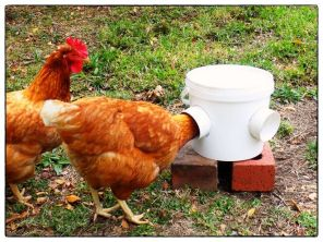 Creative DIY Chicken Feeder from PVC 1