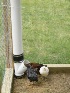 Creative DIY Chicken Feeder from PVC 21