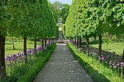 Fascinating Evergreen Pleached Trees for Outdoor Landscaping 11