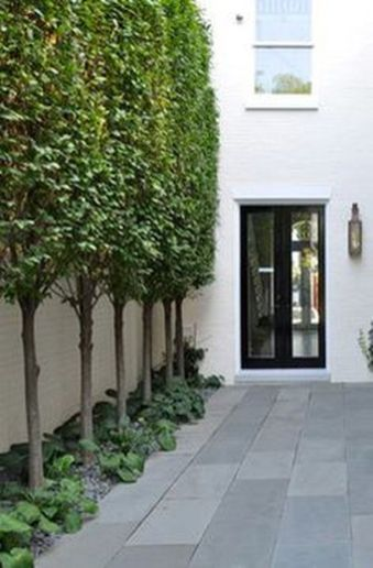Fascinating Evergreen Pleached Trees for Outdoor Landscaping 27