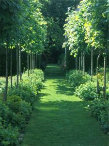 Fascinating Evergreen Pleached Trees for Outdoor Landscaping 35