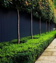 Fascinating Evergreen Pleached Trees for Outdoor Landscaping 44