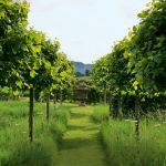 Fascinating Evergreen Pleached Trees for Outdoor Landscaping 56