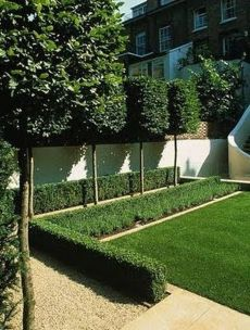 Fascinating Evergreen Pleached Trees for Outdoor Landscaping 58